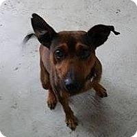 Adopt A Pet :: Sparky - Lewisburg, TN