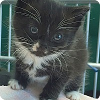 Adopt A Pet :: MAYA - Cliffside Park, NJ