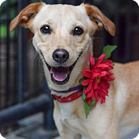 Adopt A Pet :: Darla - Baton Rouge, LA