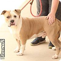 Adopt A Pet :: Spotsylvania Shelter #16-3390 'Kermit' - Fredericksburg, VA