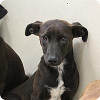 Adopt A Pet :: Peggy - Old Saybrook, CT