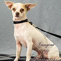Adopt A Pet :: Benny - Crescent, OK