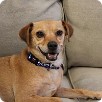 Adopt A Pet :: Lilly - Denver, CO