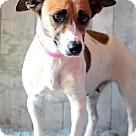 Adopt A Pet :: Vanita