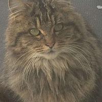 Adopt A Pet :: Kris - Montreal, QC