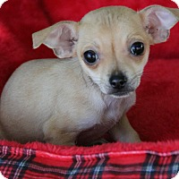 Adopt A Pet :: Sweet Pea - Yuba City, CA