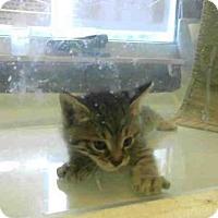 Adopt A Pet :: *CHUCK - Sacramento, CA