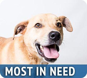 Labrador Retriever Mix Dog for adoption in Decatur, Georgia - Elton