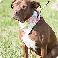 Adopt A Pet :: Cocoa - New Smyrna Beach, FL