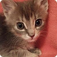Adopt A Pet :: Jenny - Garland, TX