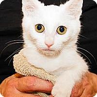Adopt A Pet :: Siri - Irvine, CA