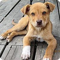 Adopt A Pet :: Skittles - Waller, TX