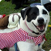 Adopt A Pet :: Molly - Baton Rouge, LA