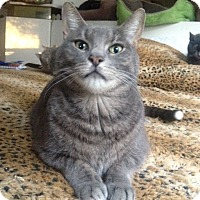Adopt A Pet :: Smokey - Long Beach, NY