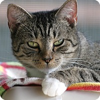 Adopt A Pet :: Victoria - North Fort Myers, FL