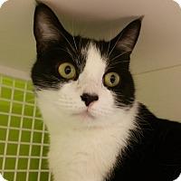 Adopt A Pet :: Willa - Middletown, CT