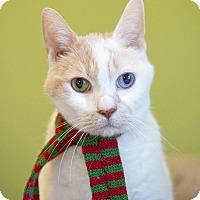 Adopt A Pet :: Tigger - Chicago, IL