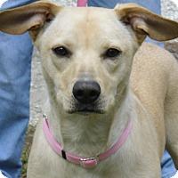 Adopt A Pet :: RILEY - Odessa, FL
