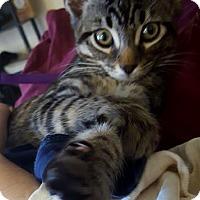 Adopt A Pet :: Rowdy - San Marcos, TX