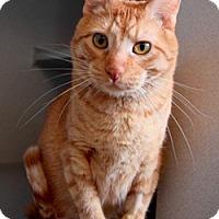 Adopt A Pet :: Chester - Des Moines, IA