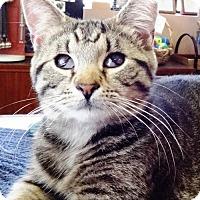 Adopt A Pet :: Noodles - Gettysburg, PA