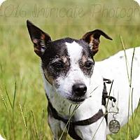 Adopt A Pet :: Yoda - Wedgefield, SC