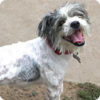 Adopt A Pet :: Bubbles - Norwalk, CT