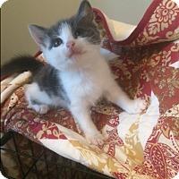 Adopt A Pet :: Blue - Sparta, NJ
