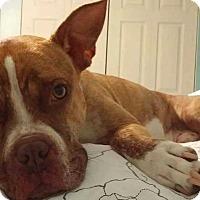 Adopt A Pet :: Rex - Brunswick, OH