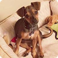 Adopt A Pet :: Jovie - Flossmoor, IL