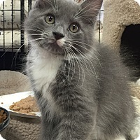 Adopt A Pet :: Brutus - Horsham, PA