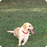 Adopt A Pet :: Amelia - Folsom, LA