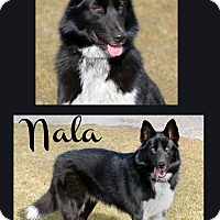 Adopt A Pet :: Nala - Idaho Falls, ID