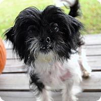 Adopt A Pet :: Curly - Michigan City, IN