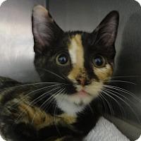 Adopt A Pet :: TADPOLE - Tucson, AZ