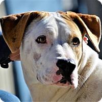 Adopt A Pet :: Judy - Lincolnton, NC
