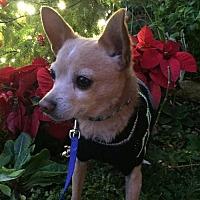 Adopt A Pet :: Drake - Los Banos, CA