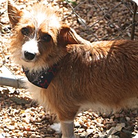 Adopt A Pet :: Wendy - Bedminster, NJ