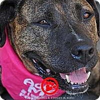 Adopt A Pet :: Shiva - Carpenteria, CA