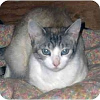 Adopt A Pet :: Emily - Davis, CA