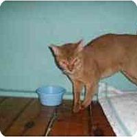 Adopt A Pet :: Sony - Hamburg, NY