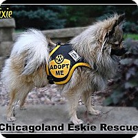 Adopt A Pet :: Pixie - Elmhurst, IL