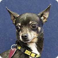 Adopt A Pet :: Stix - Ile-Perrot, QC