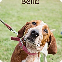 Adopt A Pet :: Bella - REDUCED ADOPTION FEE! - Howell, MI
