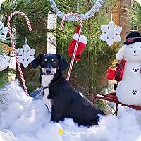 Adopt A Pet :: Marie - Baton Rouge, LA