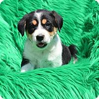 Adopt A Pet :: Rina - Groton, MA