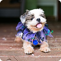 Adopt A Pet :: Ruthie - Los Angeles, CA