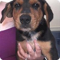 Adopt A Pet :: Henry - Waupaca, WI