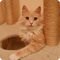 Adopt A Pet :: CP - NJ - Sammy - Blairstown, NJ