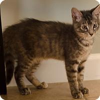 Adopt A Pet :: Derek $75 - Seneca, SC